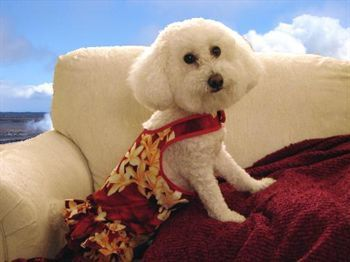 I am Zoe, My mom went to Hawaii and all I got was this dress!!!