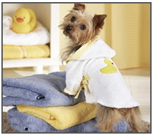 Dog in a robe after grooming